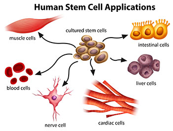stemcell-application-2