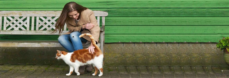 pet-animals-cat